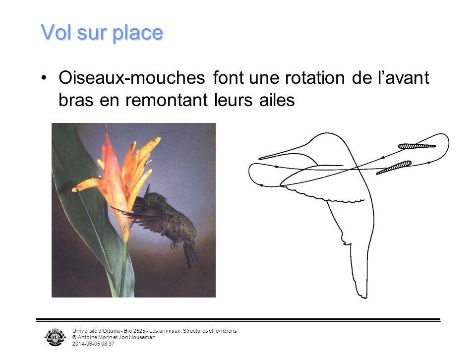 Université dOttawa - Bio 2525 - Les animaux: Structures et fonctions © Antoine Morin et Jon Houseman 2014-06-05 08:39 Primaires Secondaires Vecteur de
