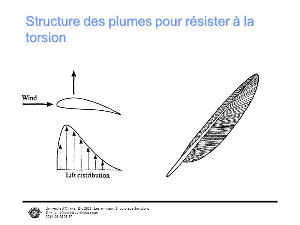 Université dOttawa - Bio 2525 - Les animaux: Structures et fonctions © Antoine Morin et Jon Houseman 2014-06-05 08:39 Vol sur place Oiseaux-mouches fo