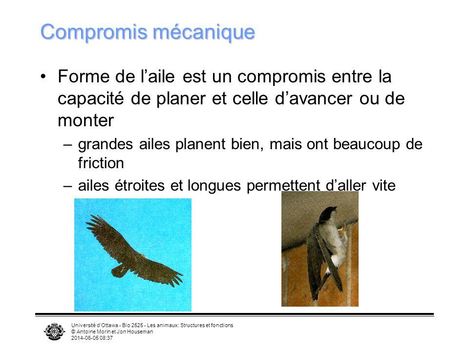 Université dOttawa - Bio 2525 - Les animaux: Structures et fonctions © Antoine Morin et Jon Houseman 2014-06-05 08:39 Structure des plumes pour résist