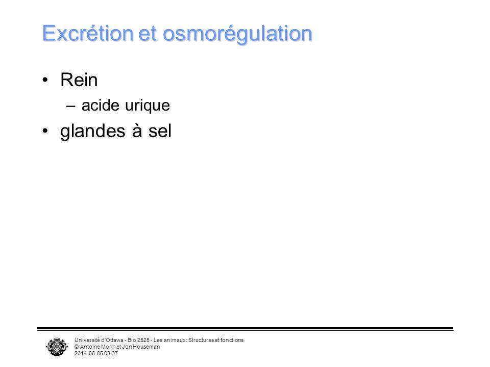 Université dOttawa - Bio 2525 - Les animaux: Structures et fonctions © Antoine Morin et Jon Houseman 2014-06-05 08:39 Système digestif Oesophage Jabot