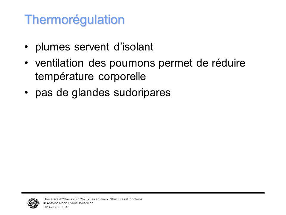Université dOttawa - Bio 2525 - Les animaux: Structures et fonctions © Antoine Morin et Jon Houseman 2014-06-05 08:39 Excrétion et osmorégulation Rein