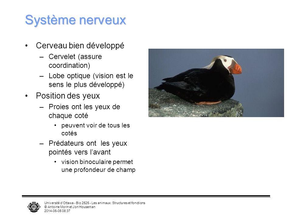 Université dOttawa - Bio 2525 - Les animaux: Structures et fonctions © Antoine Morin et Jon Houseman 2014-06-05 08:39 Thermorégulation plumes servent