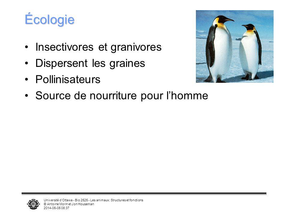 Université dOttawa - Bio 2525 - Les animaux: Structures et fonctions © Antoine Morin et Jon Houseman 2014-06-05 08:39 Chants Oiseau mystère 1 Oiseau m