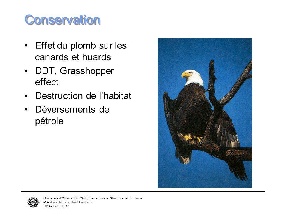 Université dOttawa - Bio 2525 - Les animaux: Structures et fonctions © Antoine Morin et Jon Houseman 2014-06-05 08:39 Écologie Insectivores et granivo