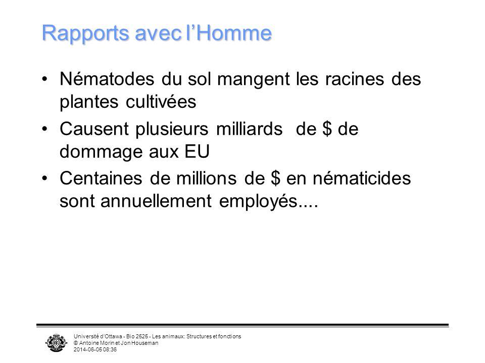 Université dOttawa - Bio 2525 - Les animaux: Structures et fonctions © Antoine Morin et Jon Houseman 2014-06-05 08:39 Rapports avec lHomme Nématodes d