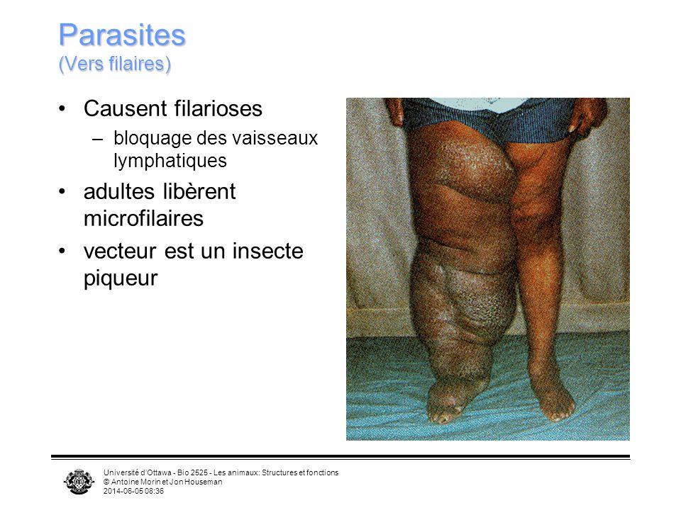 Université dOttawa - Bio 2525 - Les animaux: Structures et fonctions © Antoine Morin et Jon Houseman 2014-06-05 08:39 Parasites (Vers filaires) Causen