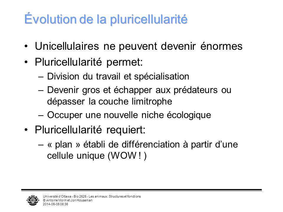 Université dOttawa - Bio 2525 - Les animaux: Structures et fonctions © Antoine Morin et Jon Houseman 2014-06-05 08:39 Évolution de la pluricellularité Unicellulaires ne peuvent devenir énormes Pluricellularité permet: –Division du travail et spécialisation –Devenir gros et échapper aux prédateurs ou dépasser la couche limitrophe –Occuper une nouvelle niche écologique Pluricellularité requiert: –« plan » établi de différenciation à partir dune cellule unique (WOW .