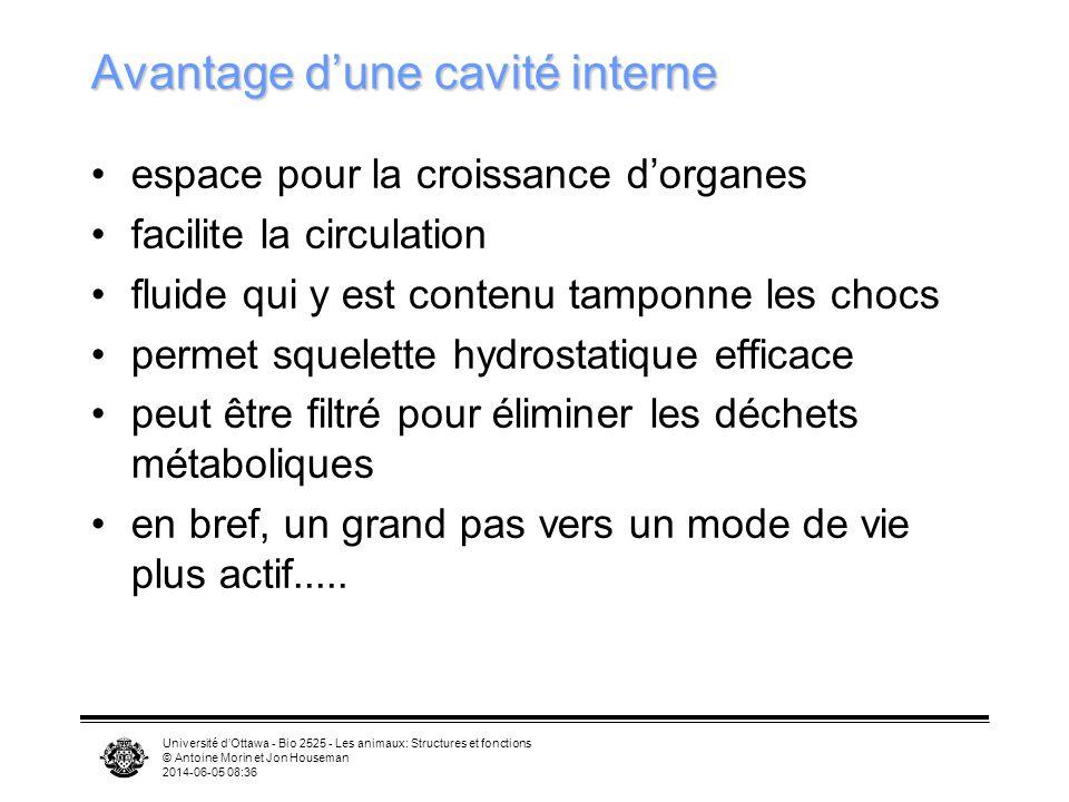 Université dOttawa - Bio 2525 - Les animaux: Structures et fonctions © Antoine Morin et Jon Houseman 2014-06-05 08:39 Avantage dune cavité interne esp
