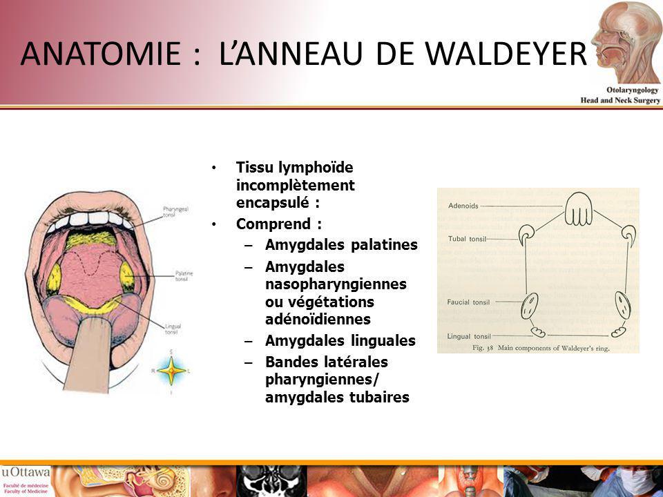 ANATOMIE : LANNEAU DE WALDEYER Tissu lymphoïde incomplètement encapsulé : Comprend : – Amygdales palatines – Amygdales nasopharyngiennes ou végétation