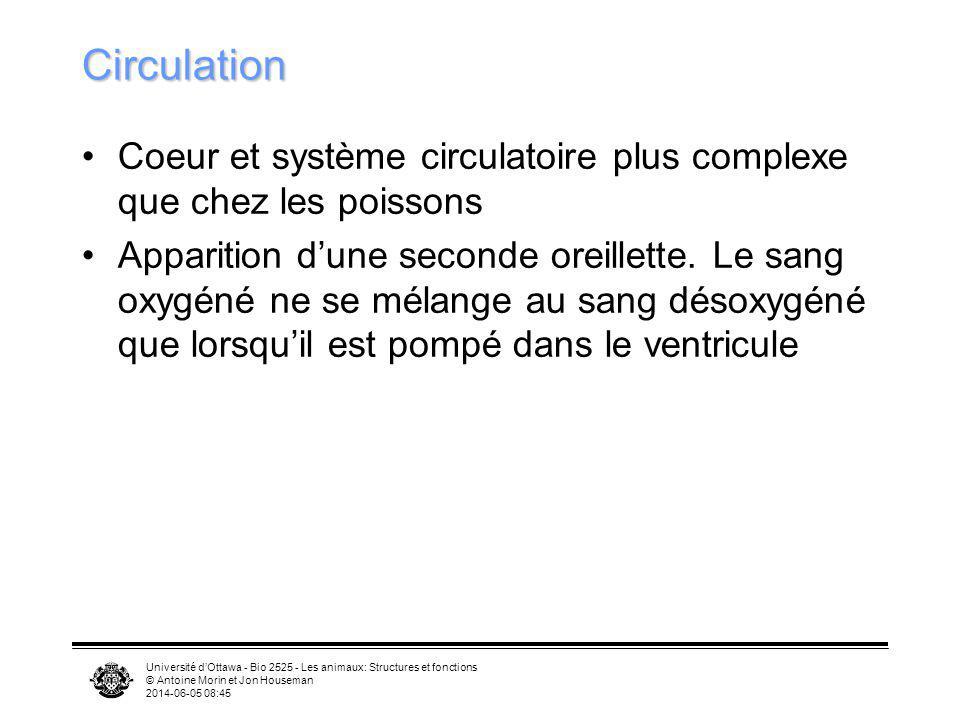 Université dOttawa - Bio 2525 - Les animaux: Structures et fonctions © Antoine Morin et Jon Houseman 2014-06-05 08:46 Circulation Coeur et système cir