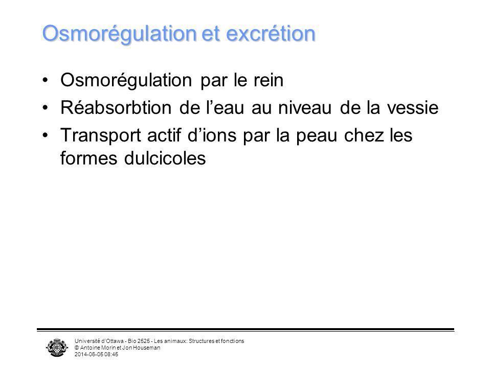 Université dOttawa - Bio 2525 - Les animaux: Structures et fonctions © Antoine Morin et Jon Houseman 2014-06-05 08:46 Osmorégulation et excrétion Osmo