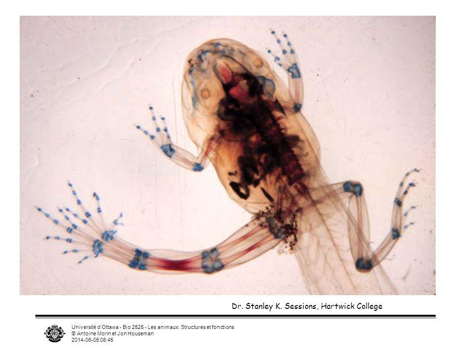 Université dOttawa - Bio 2525 - Les animaux: Structures et fonctions © Antoine Morin et Jon Houseman 2014-06-05 08:46 Dr. Stanley K. Sessions, Hartwic