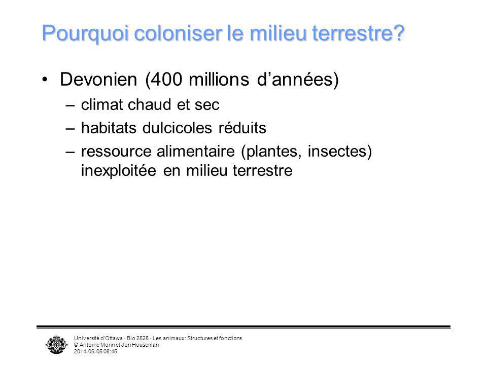 Université dOttawa - Bio 2525 - Les animaux: Structures et fonctions © Antoine Morin et Jon Houseman 2014-06-05 08:46 Pourquoi coloniser le milieu ter