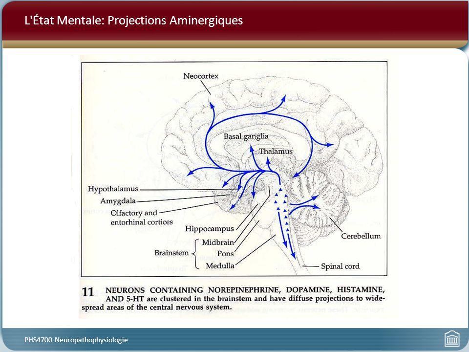 L'État Mentale: Projections Aminergiques PHS4700 Neuropathophysiologie