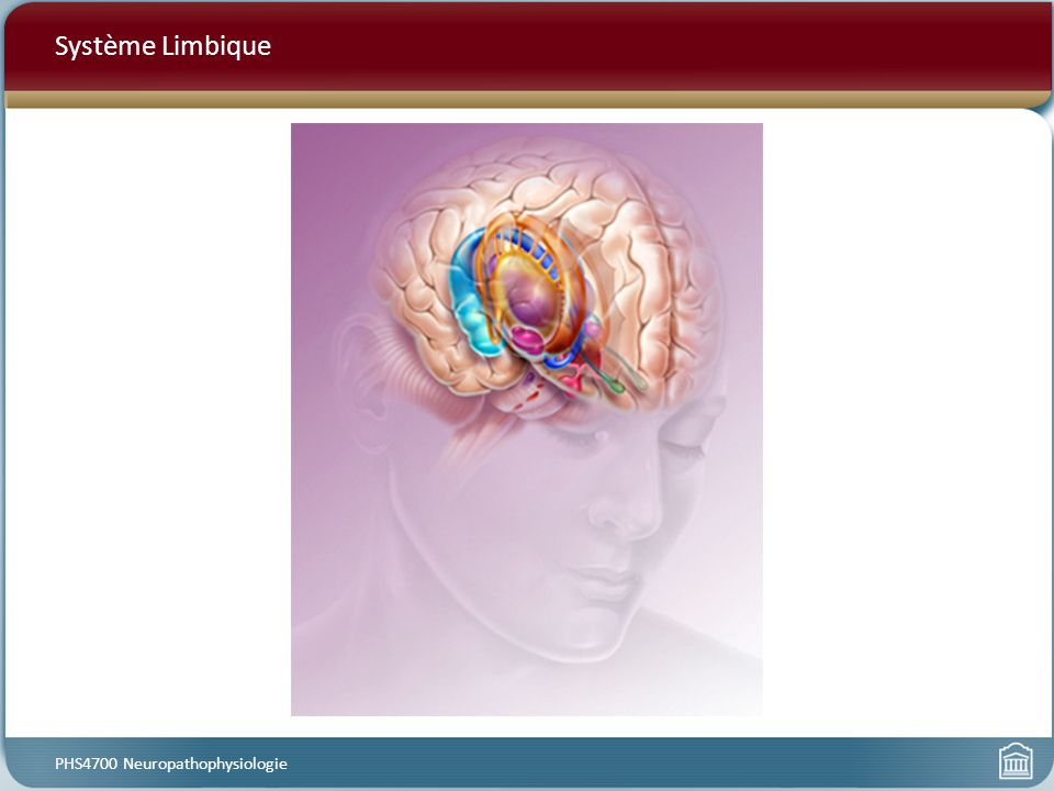 Système Limbique PHS4700 Neuropathophysiologie