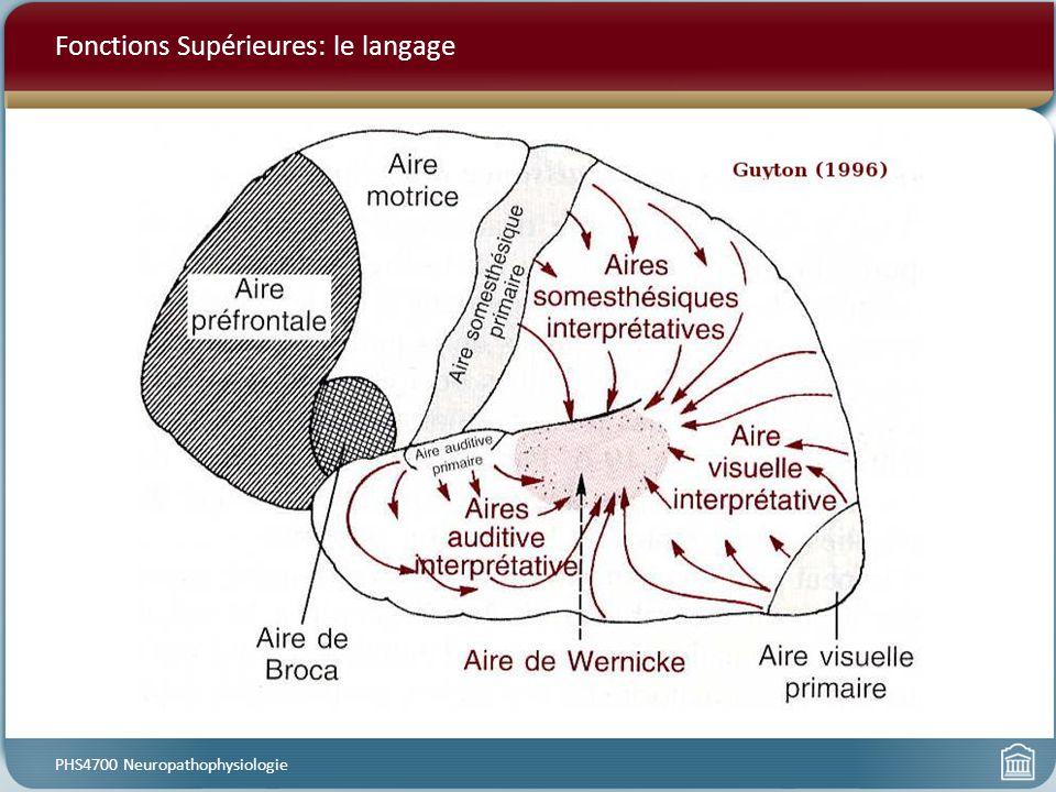 Fonctions Supérieures: le langage PHS4700 Neuropathophysiologie