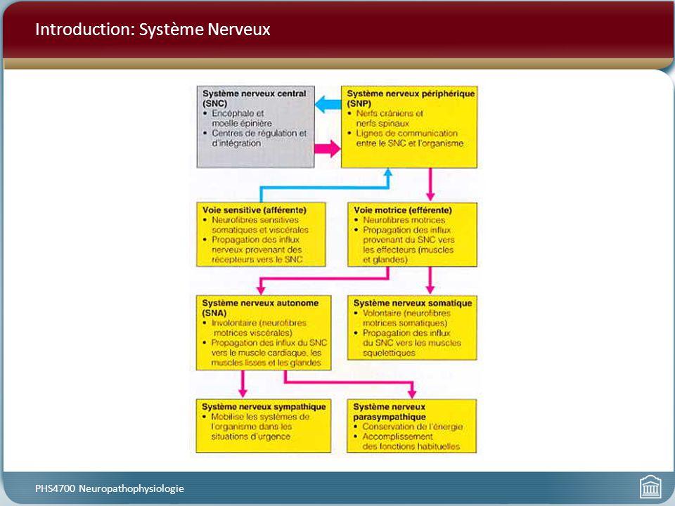 Introduction: Système Nerveux PHS4700 Neuropathophysiologie