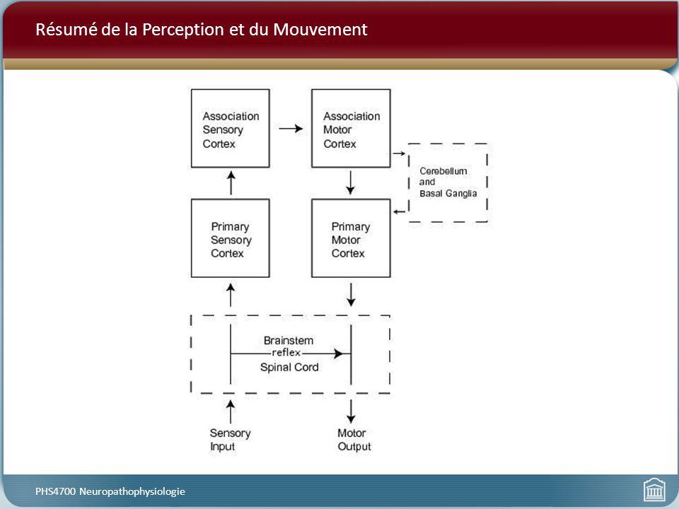 Résumé de la Perception et du Mouvement PHS4700 Neuropathophysiologie