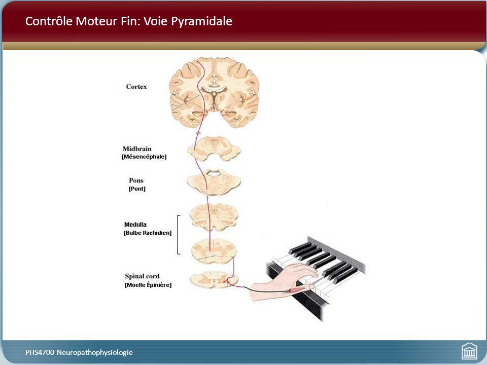 Contrôle Moteur Fin: Voie Pyramidale PHS4700 Neuropathophysiologie