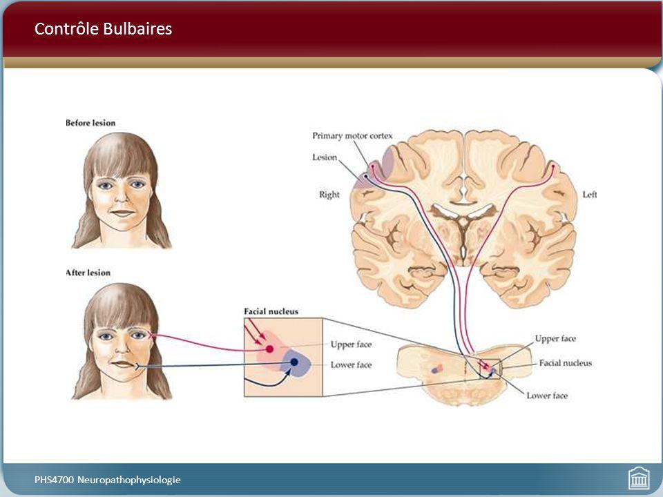 Contrôle Bulbaires PHS4700 Neuropathophysiologie