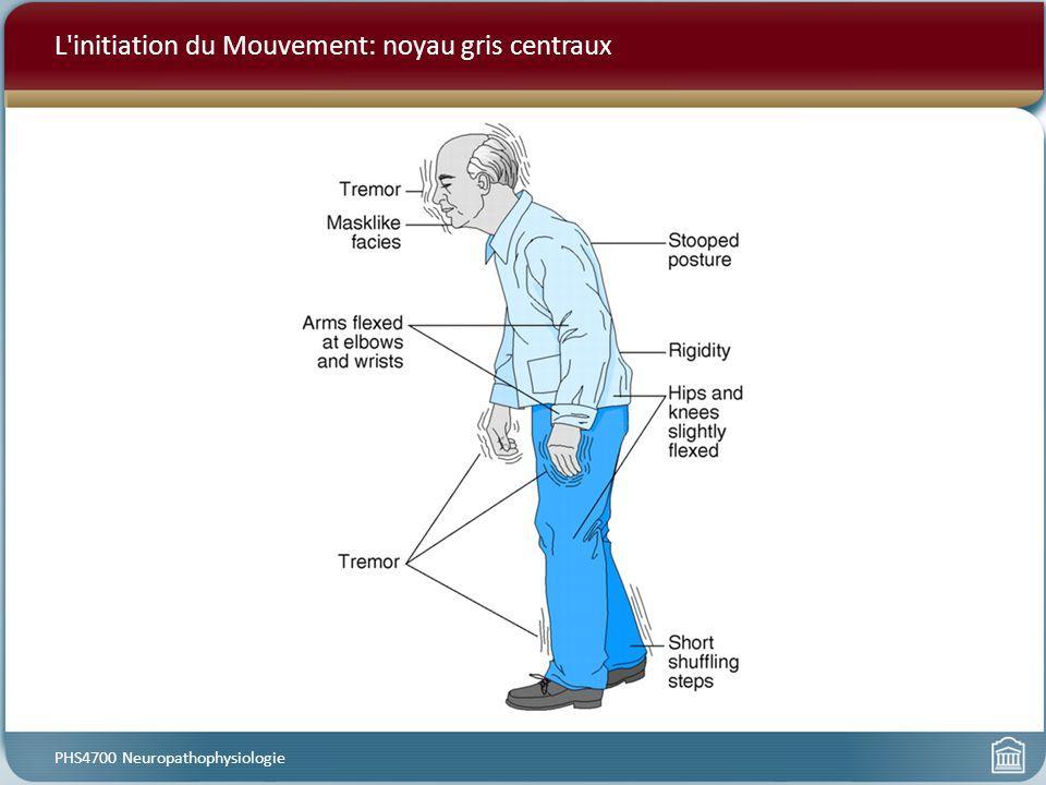 L'initiation du Mouvement: noyau gris centraux PHS4700 Neuropathophysiologie