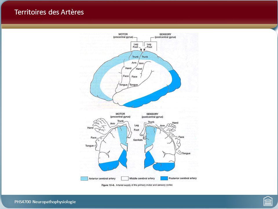 Territoires des Artères PHS4700 Neuropathophysiologie