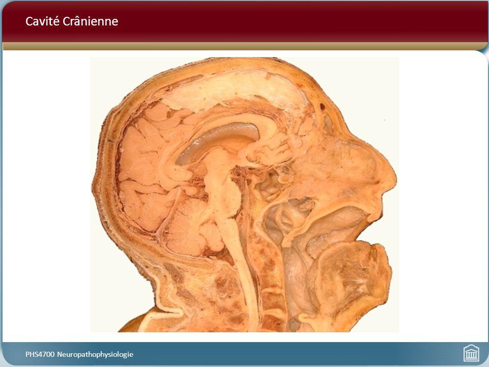 Cavité Crânienne PHS4700 Neuropathophysiologie