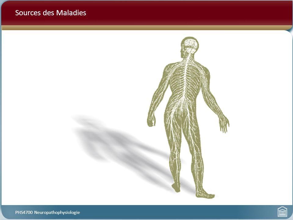 La Maladie D Alzheimer PHS4700 Neuropathophysiologie