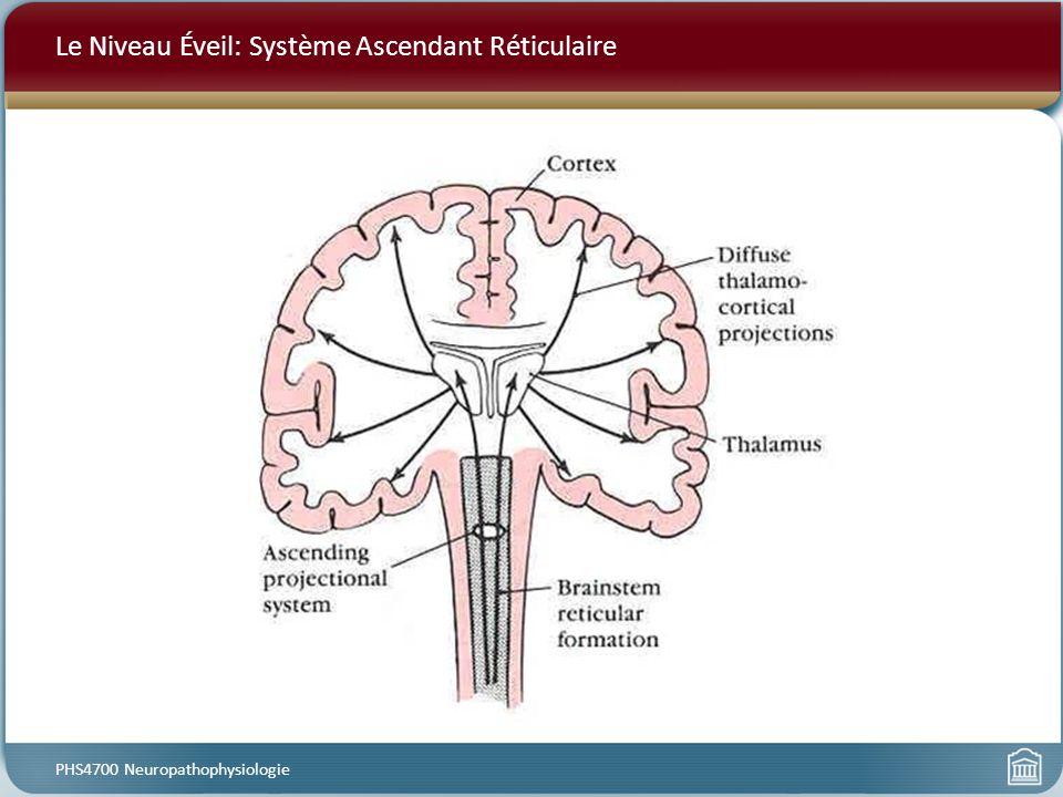 Le Niveau Éveil: Système Ascendant Réticulaire PHS4700 Neuropathophysiologie