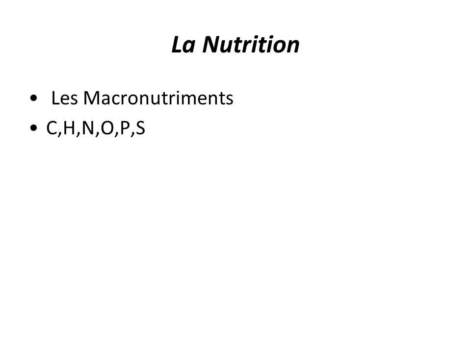 Le Carbone Requis pour la synthèse de tous les composés organiques : –Glucides –Lipides –Protéines –Acides nucléiques