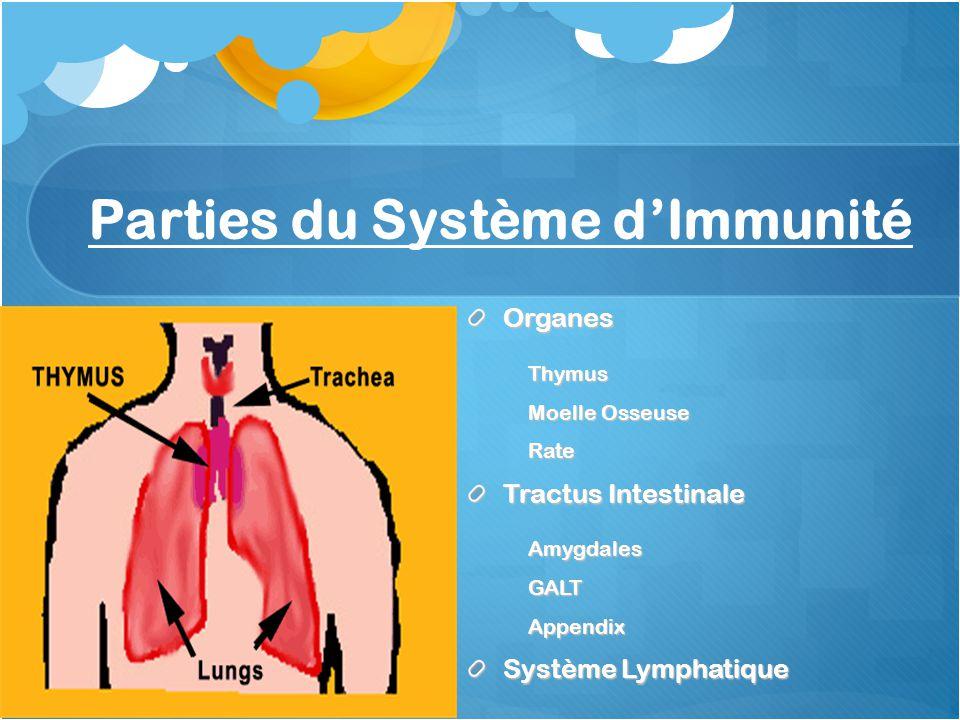 Parties du Système dImmunité OrganesThymus Moelle Osseuse Rate Tractus Intestinale AmygdalesGALTAppendix Système Lymphatique