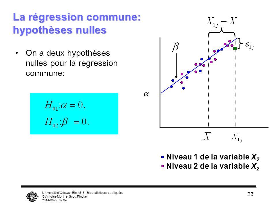 Université dOttawa - Bio 4518 - Biostatistiques appliquées © Antoine Morin et Scott Findlay 2014-06-05 09:06 23 La régression commune: hypothèses nulles On a deux hypothèses nulles pour la régression commune: Niveau 1 de la variable X 2 Niveau 2 de la variable X 2