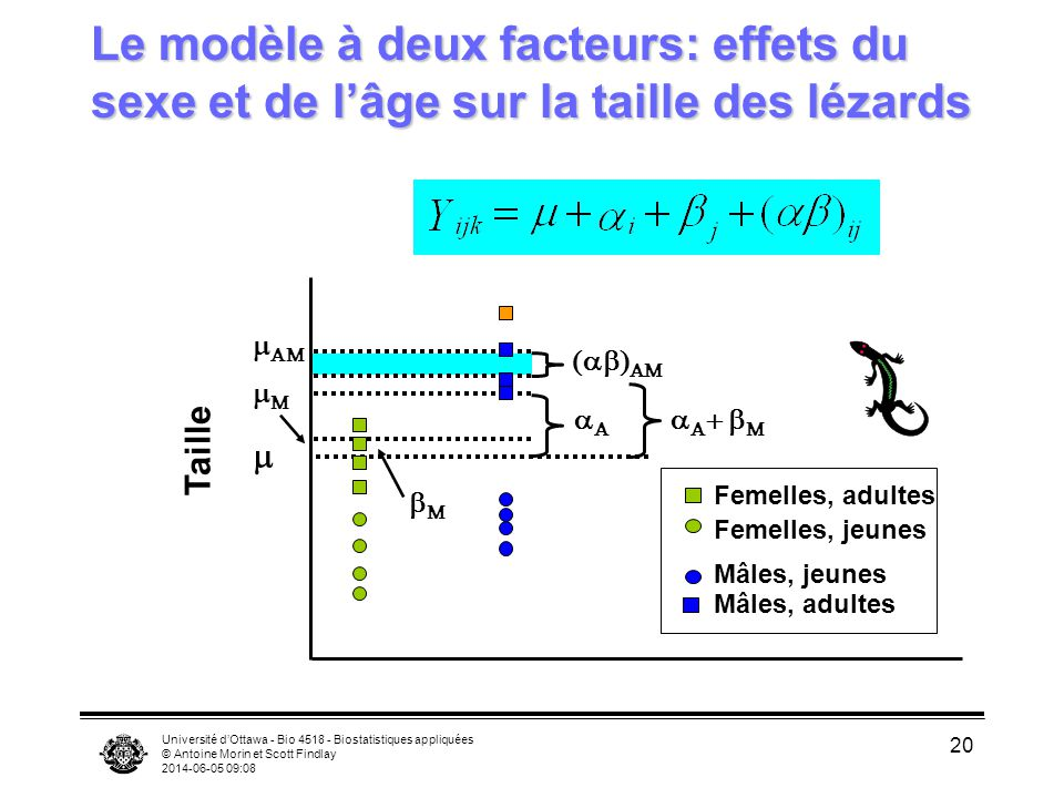 Université dOttawa - Bio 4518 - Biostatistiques appliquées © Antoine Morin et Scott Findlay 2014-06-05 09:10 20 Le modèle à deux facteurs: effets du s