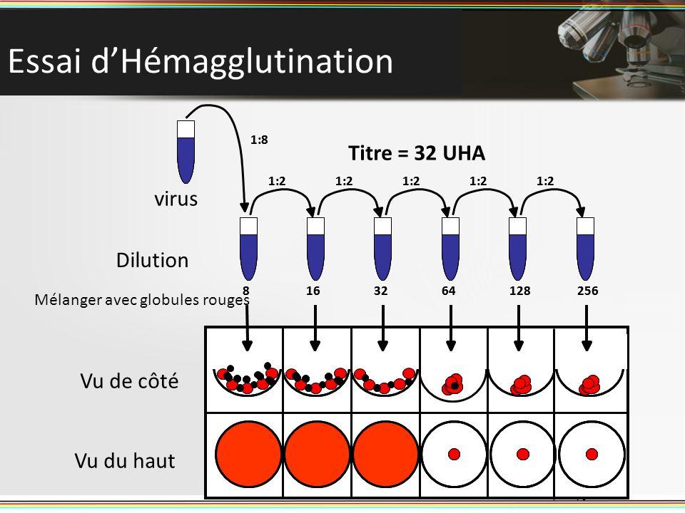 Essai dHémagglutination 16 1:8 1:2 8163264128256 virus Dilution Mélanger avec globules rouges Titre = 32 UHA 1:8 1:2 8163264128256 Vu de côté Vu du ha