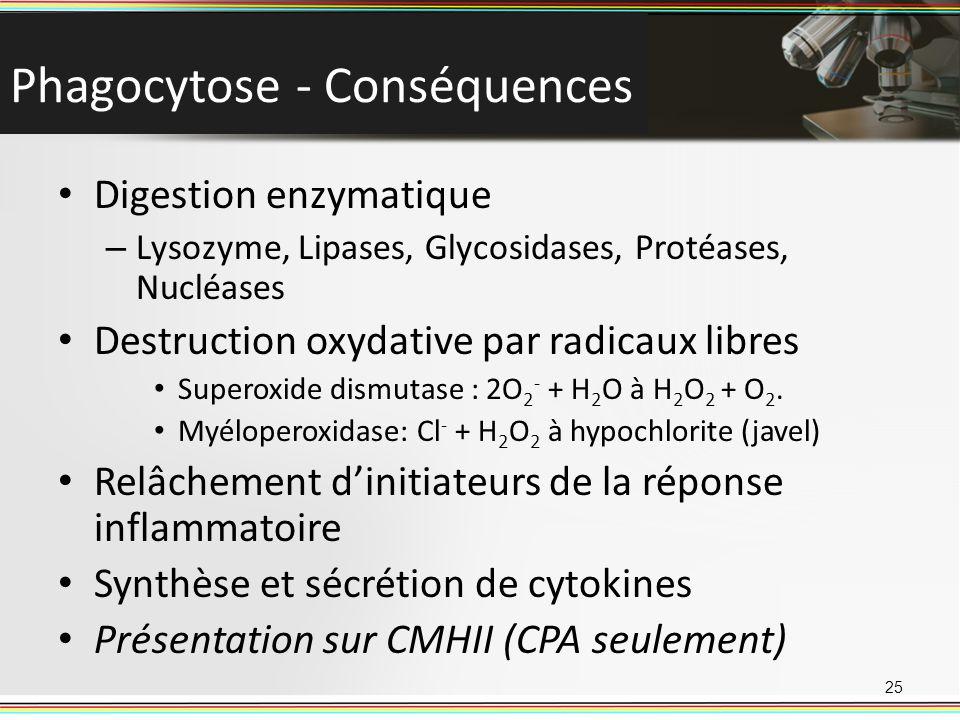 Phagocytose - Conséquences Digestion enzymatique – Lysozyme, Lipases, Glycosidases, Protéases, Nucléases Destruction oxydative par radicaux libres Sup