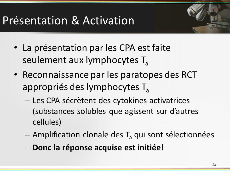 Présentation & Activation La présentation par les CPA est faite seulement aux lymphocytes T a Reconnaissance par les paratopes des RCT appropriés des