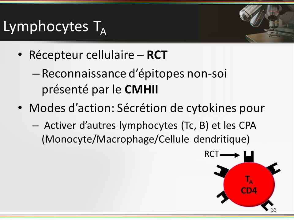 Lymphocytes T A Récepteur cellulaire – RCT – Reconnaissance dépitopes non-soi présenté par le CMHII Modes daction: Sécrétion de cytokines pour – Activ