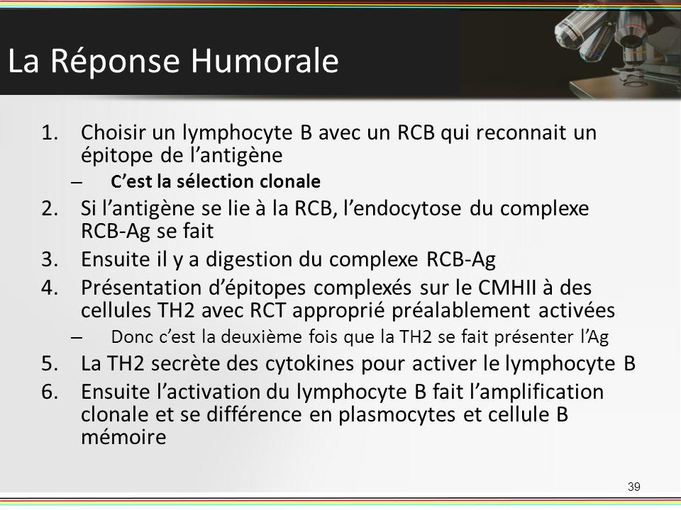 La Réponse Humorale 1.Choisir un lymphocyte B avec un RCB qui reconnait un épitope de lantigène – Cest la sélection clonale 2.Si lantigène se lie à la