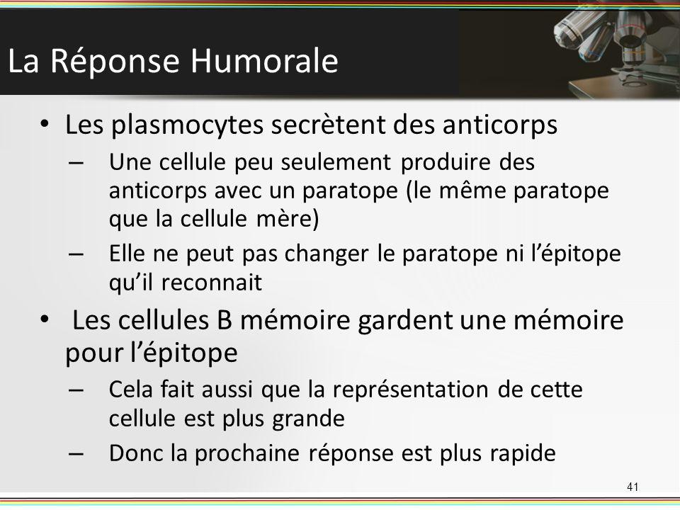 La Réponse Humorale Les plasmocytes secrètent des anticorps – Une cellule peu seulement produire des anticorps avec un paratope (le même paratope que