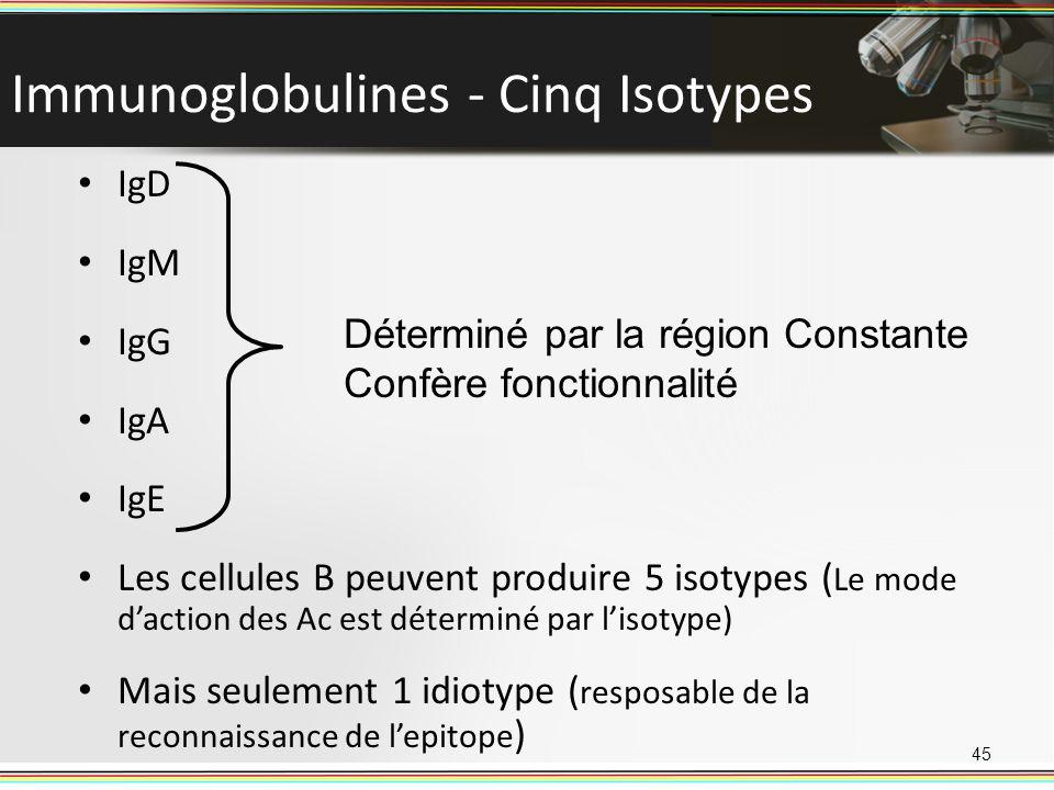 Immunoglobulines - Cinq Isotypes 45 IgD IgM IgG IgA IgE Les cellules B peuvent produire 5 isotypes ( Le mode daction des Ac est déterminé par lisotype
