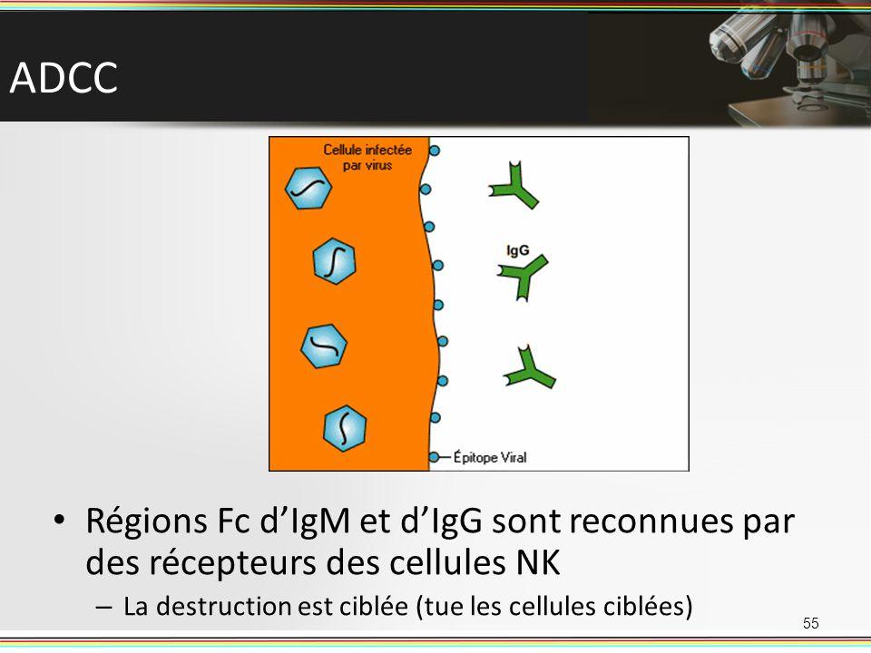 ADCC 55 Régions Fc dIgM et dIgG sont reconnues par des récepteurs des cellules NK – La destruction est ciblée (tue les cellules ciblées)
