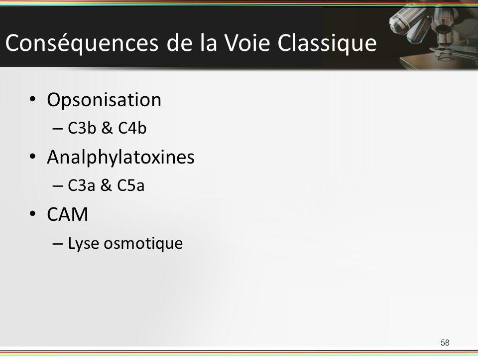 Conséquences de la Voie Classique Opsonisation – C3b & C4b Analphylatoxines – C3a & C5a CAM – Lyse osmotique 58