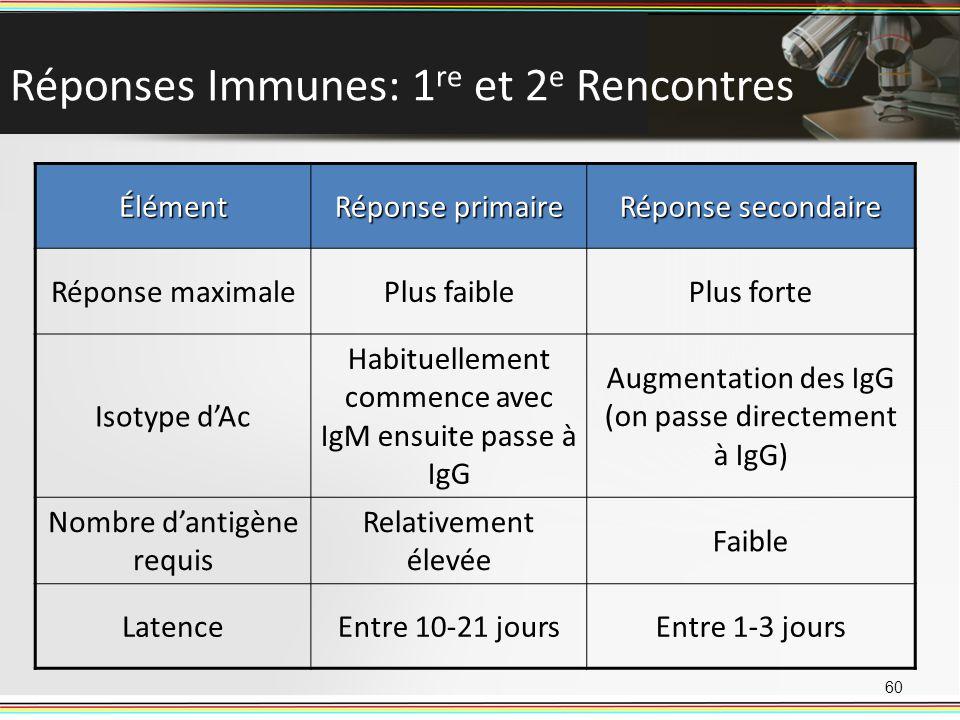 Réponses Immunes: 1 re et 2 e Rencontres 60 Élément Réponse primaire Réponse secondaire Réponse maximalePlus faiblePlus forte Isotype dAc Habituelleme