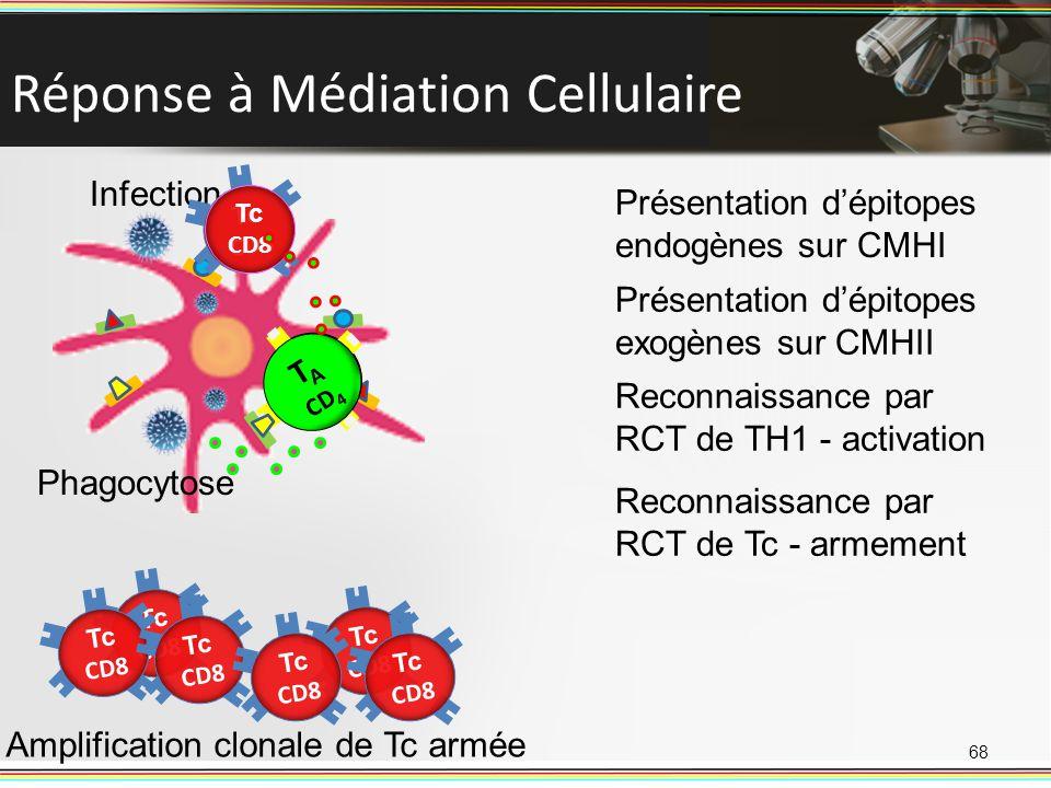 Réponse à Médiation Cellulaire 68 Infection Présentation dépitopes endogènes sur CMHI Phagocytose Présentation dépitopes exogènes sur CMHII T A CD 4 R