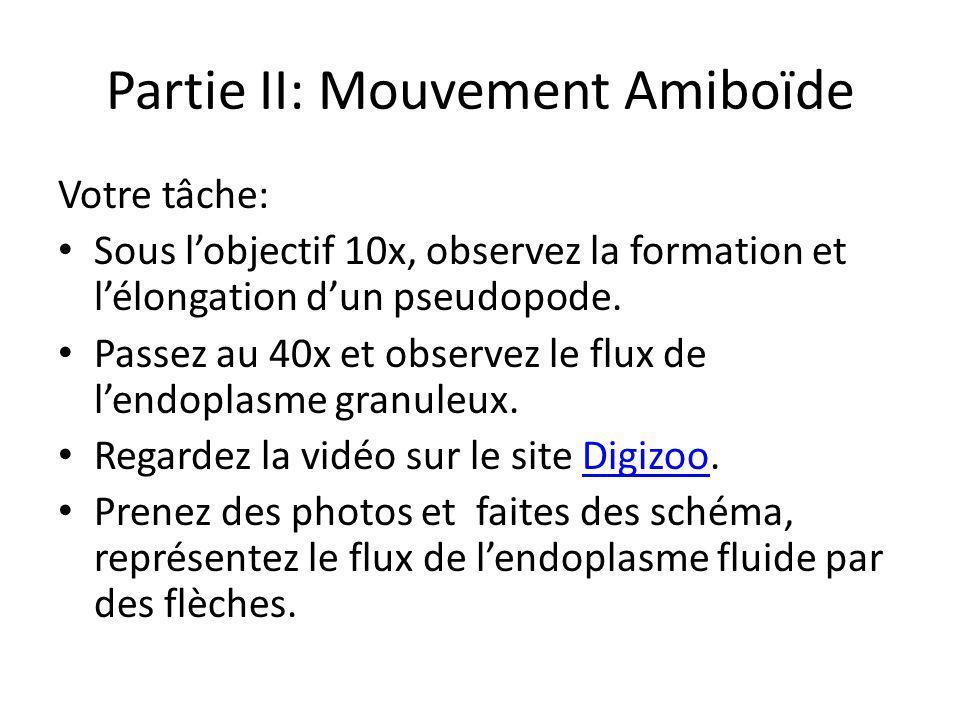 Partie II: Mouvement Amiboïde Astuces: Localisez une amibe sur la lame en utilisant lobjectif 4x.
