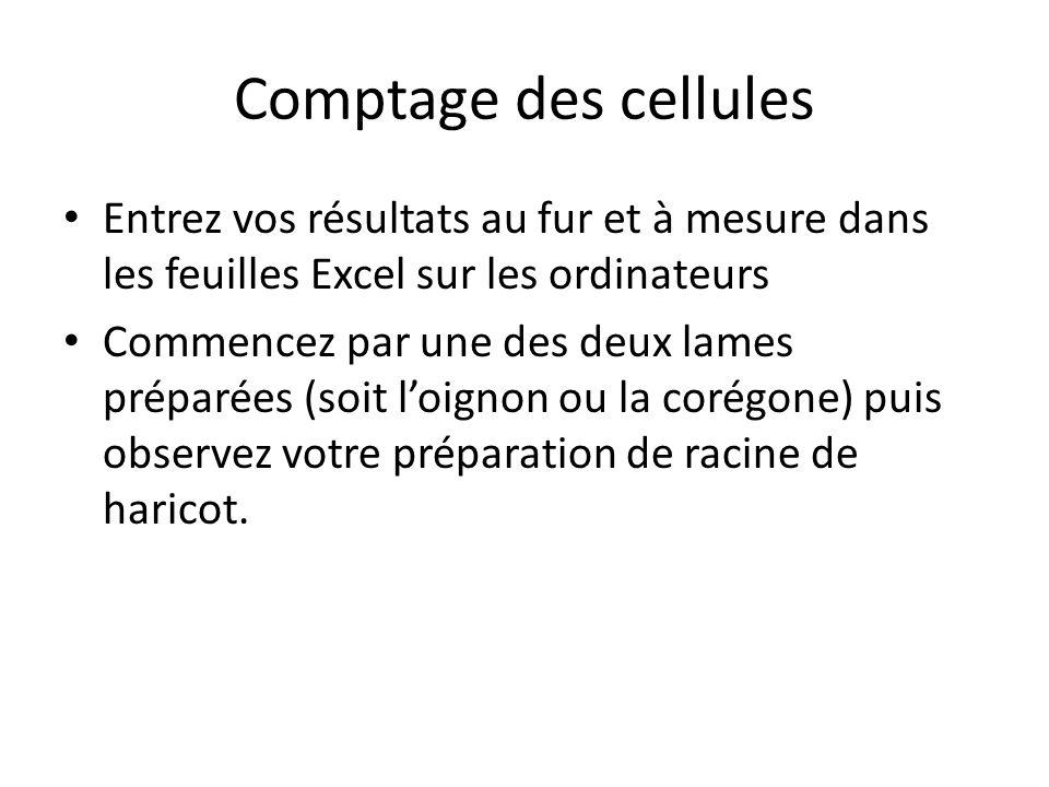 Comptage des cellules Entrez vos résultats au fur et à mesure dans les feuilles Excel sur les ordinateurs Commencez par une des deux lames préparées (soit loignon ou la corégone) puis observez votre préparation de racine de haricot.