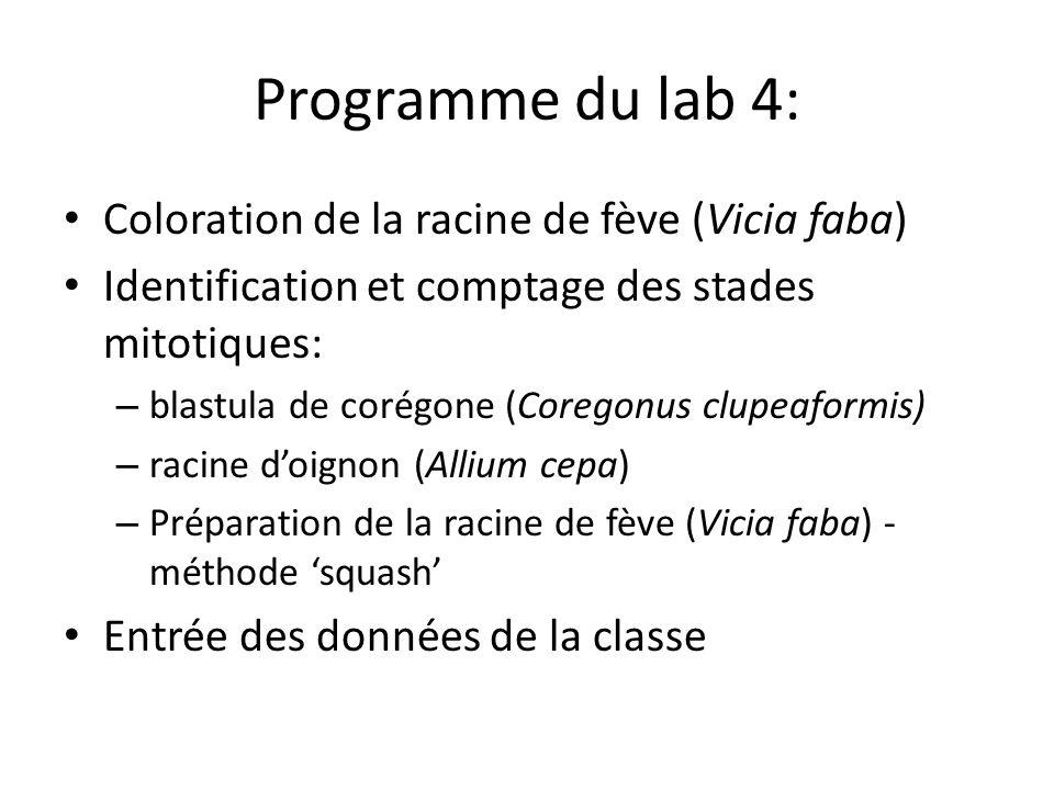 Programme du lab 4: Coloration de la racine de fève (Vicia faba) Identification et comptage des stades mitotiques: – blastula de corégone (Coregonus clupeaformis) – racine doignon (Allium cepa) – Préparation de la racine de fève (Vicia faba) - méthode squash Entrée des données de la classe