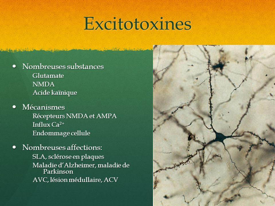 Excitotoxines Nombreuses substances Nombreuses substancesGlutamateNMDA Acide kaïnique Mécanismes Mécanismes Récepteurs NMDA et AMPA Influx Ca 2+ Endom