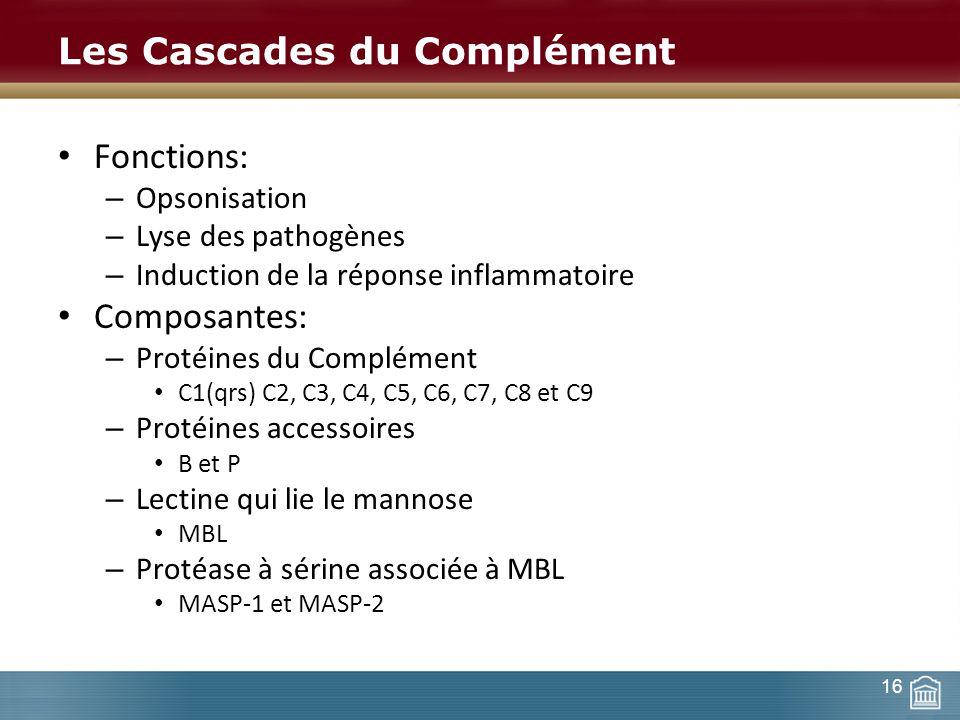 Les Cascades du Complément Fonctions: – Opsonisation – Lyse des pathogènes – Induction de la réponse inflammatoire Composantes: – Protéines du Complém