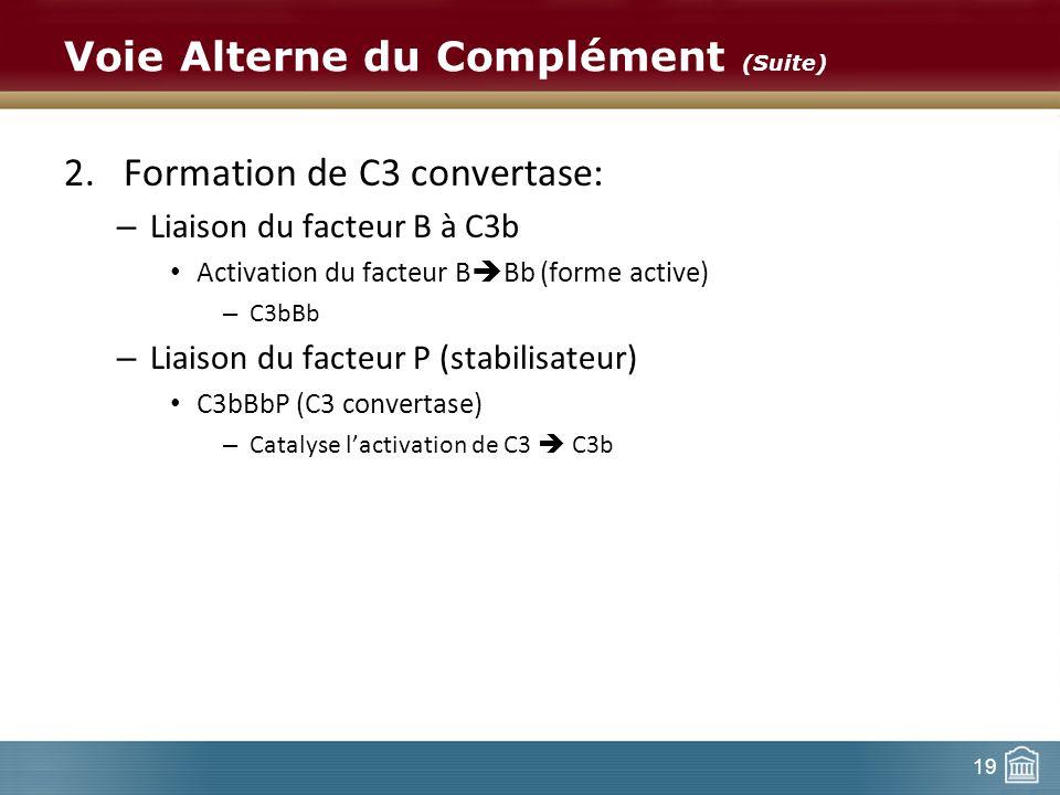 19 Voie Alterne du Complément (Suite) 2.Formation de C3 convertase: – Liaison du facteur B à C3b Activation du facteur B Bb (forme active) – C3bBb – L